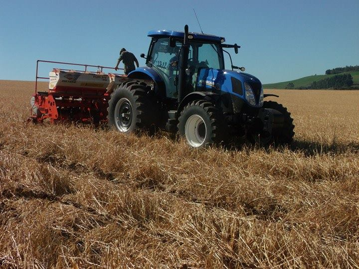 Mesmo com tempo seco, implantação das lavouras de milho chega a 66% da área total a ser cultivada