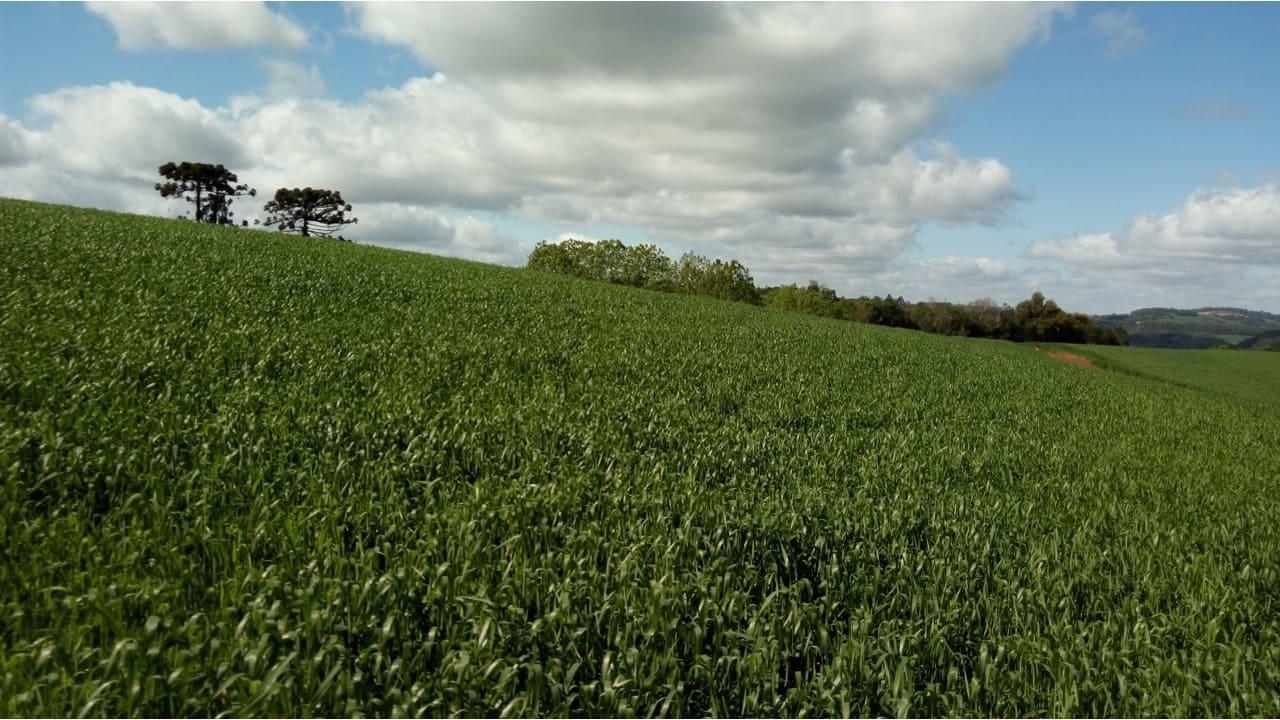 Brasil inicia exportação de semente de aveia preta à União Europeia