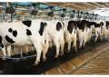 Custo de produção do leite sobe 9,4% em fevereiro