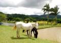 10º Congresso Brasileiro de Turismo Rural acontece em Santa Maria