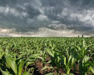 Tempo seco e quente dará lugar a chuvas fortes nos próximos sete dias