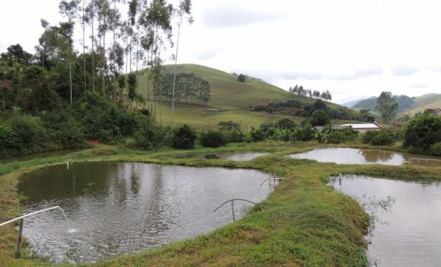 Agroindústria de abate de peixe da região Celeiro recebe visitantes