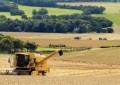 Fatores climáticos são apontados como principal desafio para o trigo