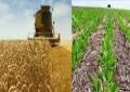 Previsão para novembro será de clima melhor para agricultura