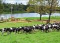 Entidades realizam audiência com o MAPA sobre a  produção de leite