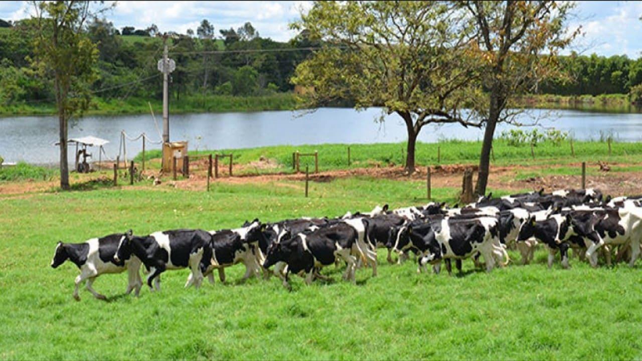 Preço do leite sobe pelo sexto mês seguido