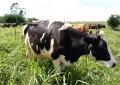 Tabela de indenizações aos produtores de leite tem reajuste