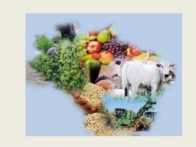 Aprovado projeto que garante pagamento de preço mínimo para produtos agropecuários