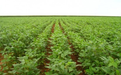 RS já plantou 48% da área prevista para a soja