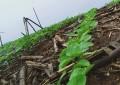 Plantio da soja no RS avança e ultrapassa 40% da área para 2017/2018