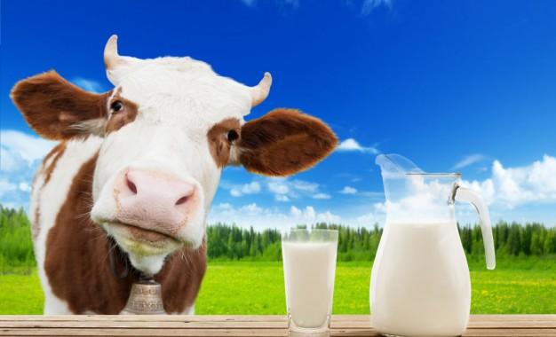 Quase 25 mil produtores abandonam atividade leiteira no RS em um ano