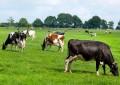 Queda de medida antidumping pode sufocar produtores de leite