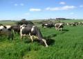 Preço do leite: Expectativa é que os valores pagos aos produtores subam
