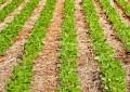 Conheça as três melhores técnicas de conservação do solo