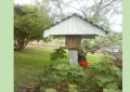 Como fazer isca para capturar enxames de abelhas Jatai