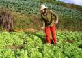 Dez fatores-chave de sucesso da horticultura