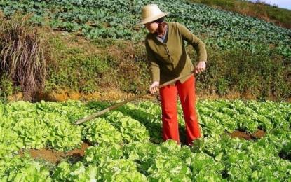 Cultivo de hortas em pequenos espaços
