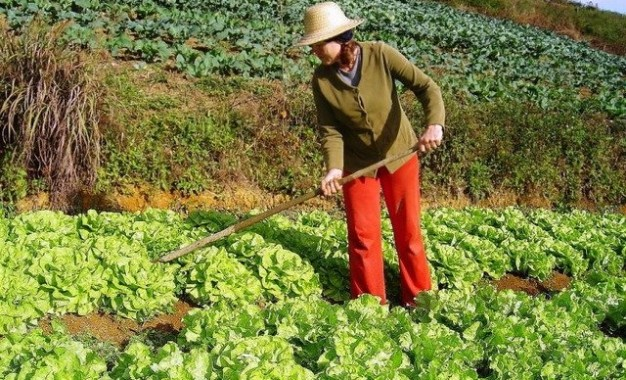 Governo revisará critérios para evitar que agricultor familiar fique sem a DAP