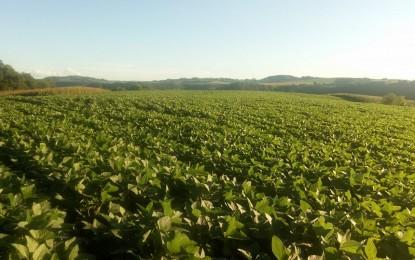 Chuva no começo do ano deve ajudar ainda mais produtividade da soja 17/18