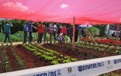 Horticultura é destaque na Expoagro 2018