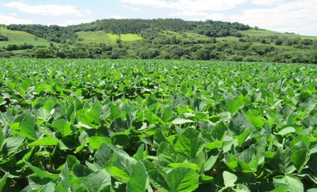 Desenvolvimento das lavouras de Soja