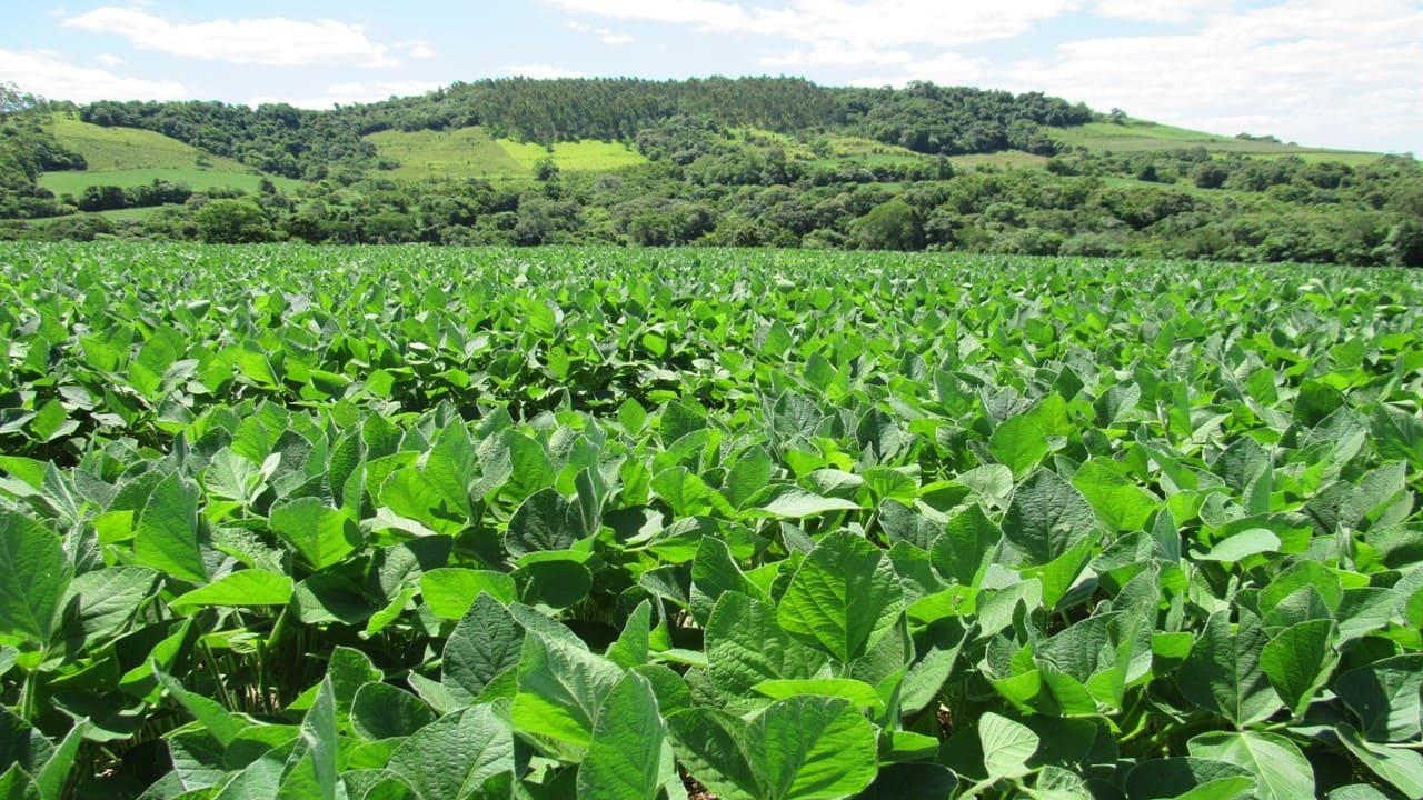 Rio Grande do Sul deve iniciar plantio da soja nesta semana