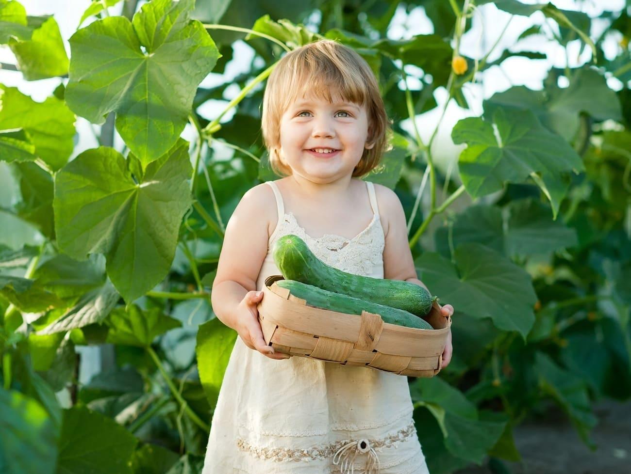 Fertilizantes Organominerais e seus Benefícios