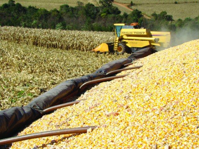 Mais da metade do milho já está colhido no Estado