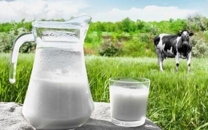 Mercado brasileiro de leite orgânico cresceu 20%