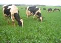 Pastagens de inverno e preço amenizam momento do produtor de leite
