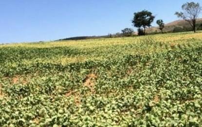 Seca na Argentina derruba safra de grãos e provoca rali de preços