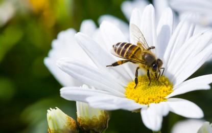 Como alimentar as abelhas no inverno