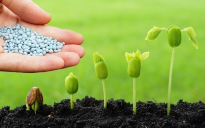 Como a análise de solo pode ajudar na produção agrícola