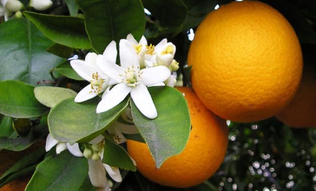 Exportação de suco de laranja do Brasil avança 24% entre julho e outubro