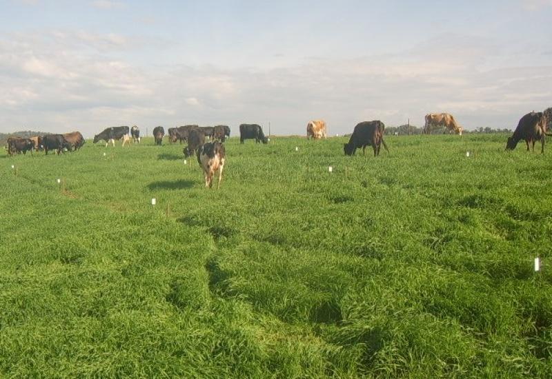 Integração Lavoura-Pecuária intensifica produção no campo