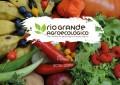 Seminário valoriza e reconhece mulheres na agroecologia durante a Semana do Alimento Orgânico