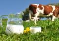 Cadeia produtiva do leite em perigo
