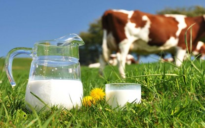 Pecuária: Custos da produção leiteira aumentou