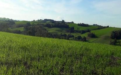 Semeadura do trigo no RS avança nas regiões produtoras