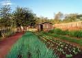 Como manter o controle de insetos na horta doméstica