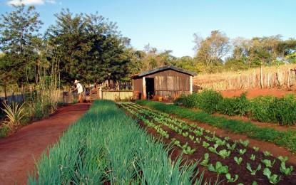 Adubo orgânico Bokash e seus benefícios