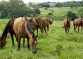 Importação de animais e de material genético no Mercosul tem novas regras