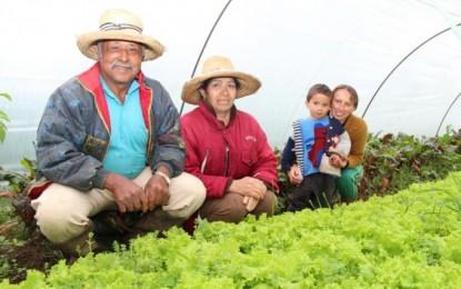 Cresol Sicoper registra liberação histórica em contratações do Plano Safra