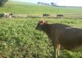 Região Sul lidera controle da tuberculose no rebanho leiteiro