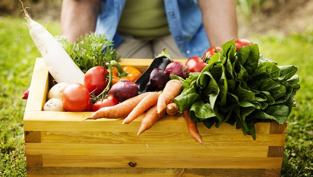 Agricultura familiar do Brasil é 8ª maior produtora de alimentos do mundo
