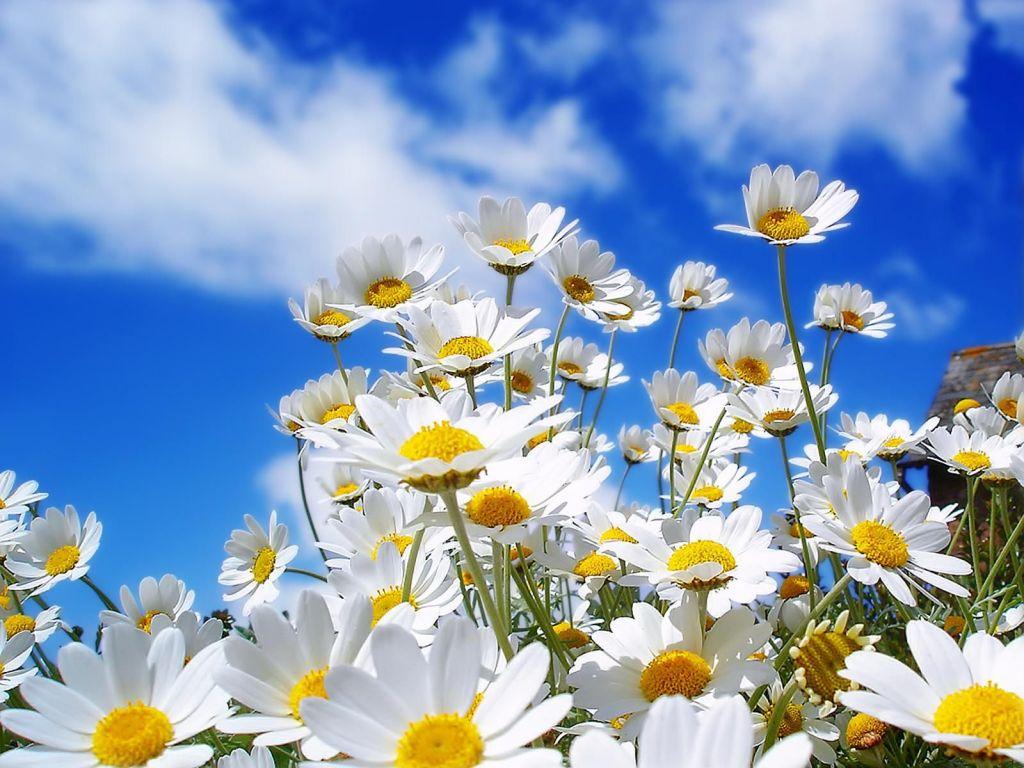 Estação da primavera começa neste sábado, confira como será o clima durante a nova estação.