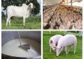 Brasil produzirá 40% a mais de alimentos de origem animal até 2050