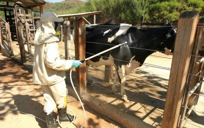 Como fazer o controle do carrapato em bovinos de leite