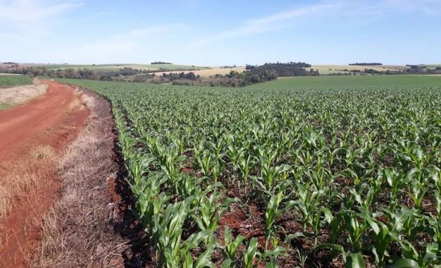 Novo Zoneamento Agrícola traz mais segurança para milho de 2ª safra