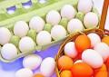 Produção de ovos bate recorde no país